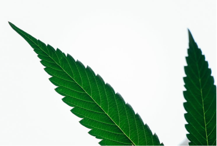 AltMed History Of Cannabis